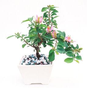 盆栽 デザイン特集へ